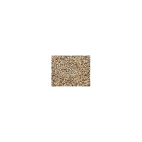 Semillas de Cilantro - 100 g