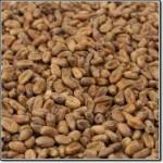Malta Caramelizada de Trigo - Carawheat Weyermann®